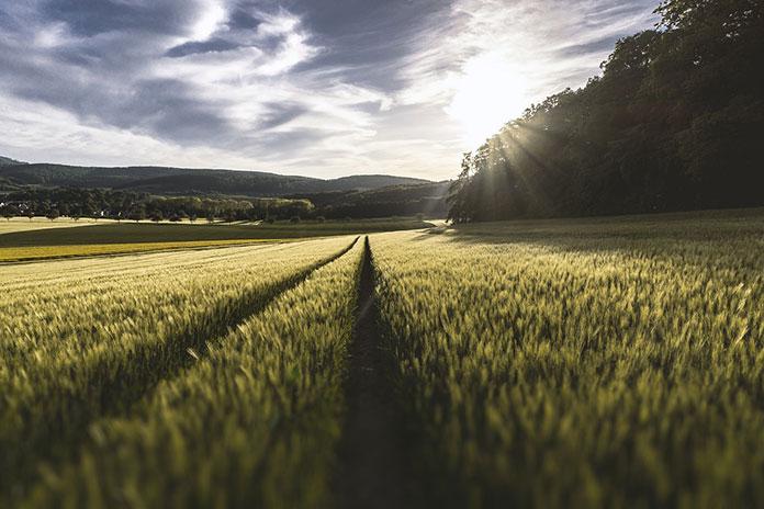 Najważniejsze zalety ofert obejmujących herbicydy